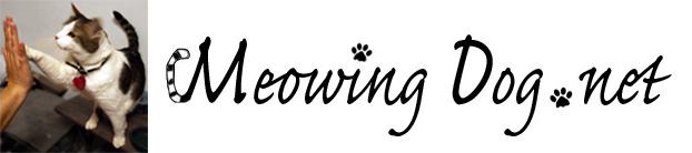 Meowing Dog